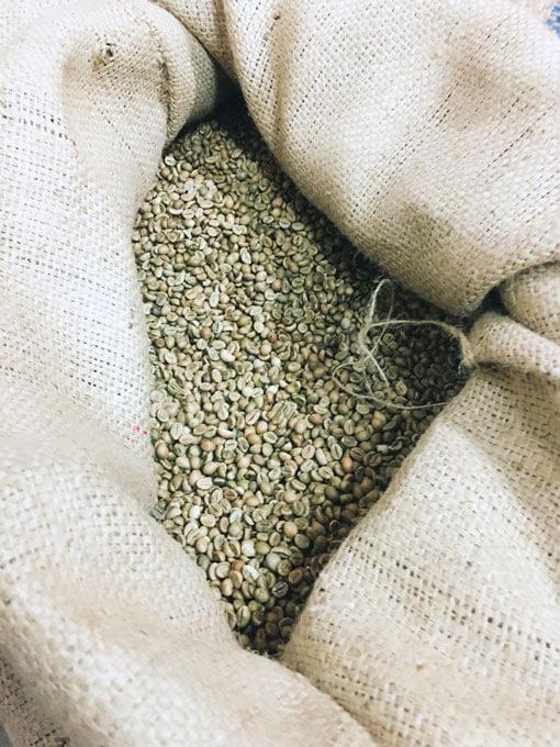 Graines de cafés